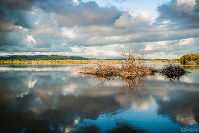 Refections of a Cloudy Day
