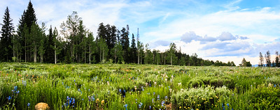 """Mystic Mountain Meadow"""