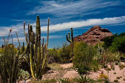 Sonoran Desert Spring, Desert Botanical Gardens