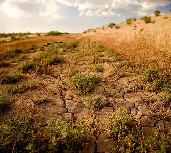 Las Cruces Desert