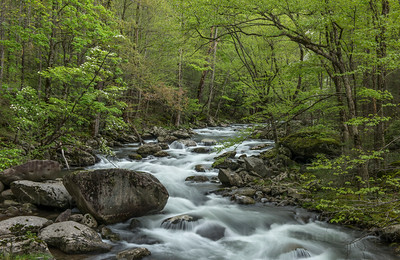 Tremont in the Spring, Great Smoky Mountains NP