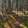20080715-Mackay Lake 034_5_6
