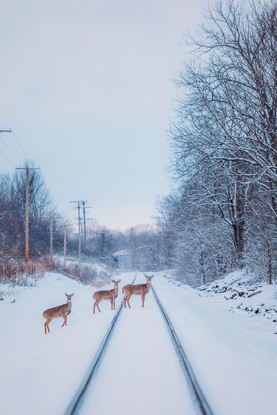 Roscoe Ewing Park | Ohio