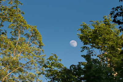Beavercreek, Ohio  A simple shot of the daytime moon through a clearing in some trees.  © 2018 Ryan L. Taylor Photography. All Rights Reserved.