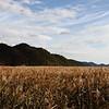 Beosan Fields