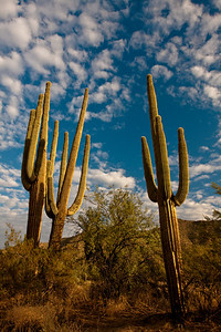 Three Saguaros, Saguaro NP