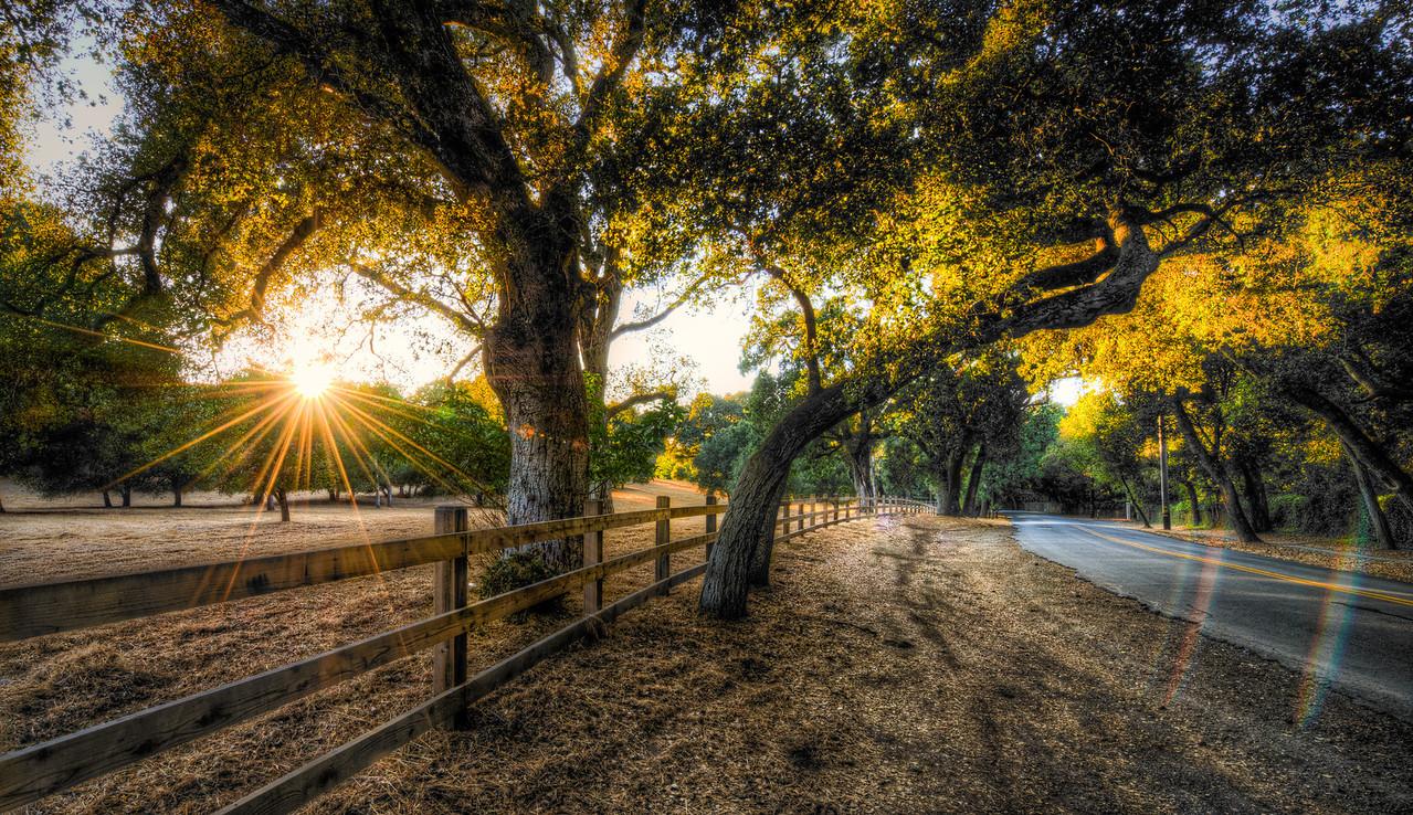 gilded light | portola valley