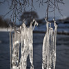 Icicles along the Swale