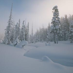 Renewal. Forbidden Plateau, Comox Valley, Vancouver Island.