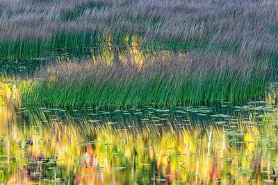 Monet's envy