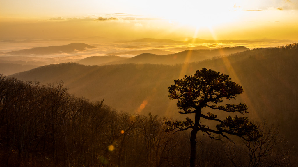 Valley of Gold     Shenandoah National Park, VA