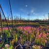 20080715-Mackay Lake 043_4_5