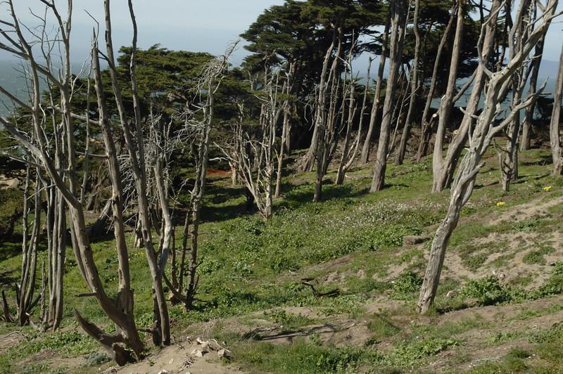 Land End, San Francisco