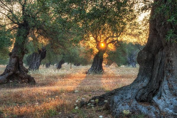 Morning olives