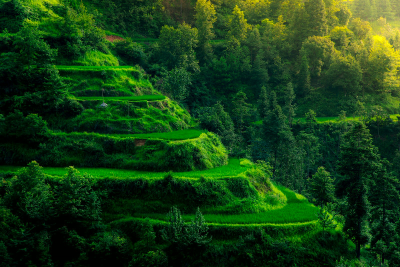 Rice Terraces of Guanxi