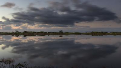 """Looking Glass"" (Kealia Pond National Wildlife Refuge)"