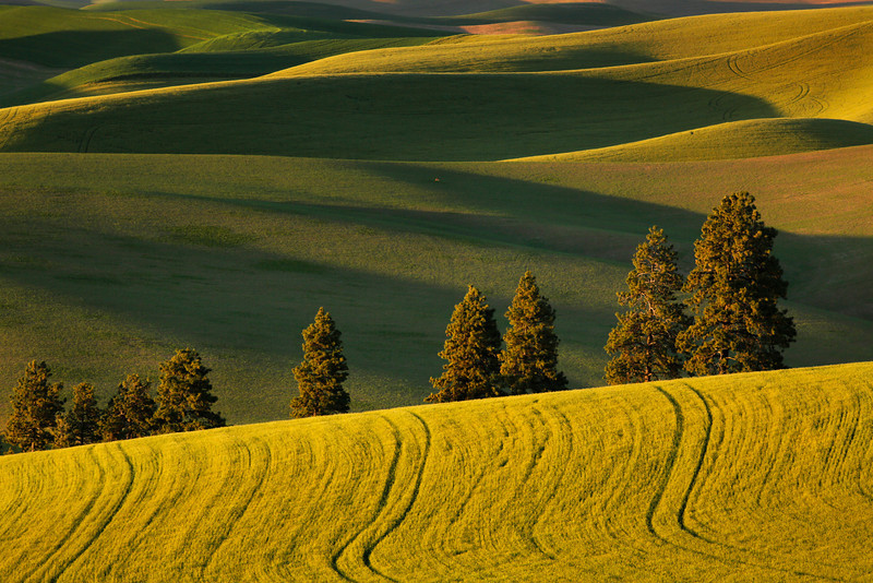 Late afternoon in the Palouse