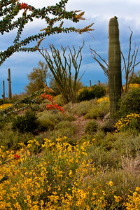 Sonoran Desert, Superstition Mtns.