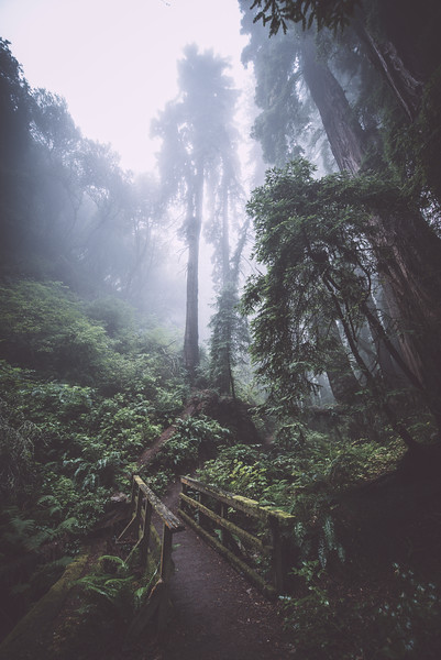 steep ravine vii | marin county, california