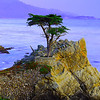 The Lone Cypress has prevailed on its rocky perch for over 250 years.  This icon of fortitude has inspired many and is revered as the living symbol of Pebble Beach company.