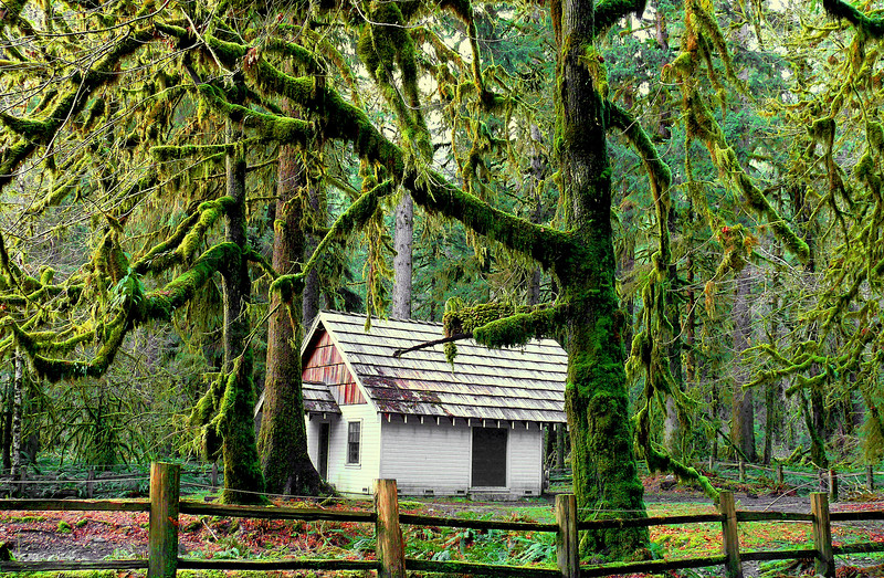 Quinault Loop Road
