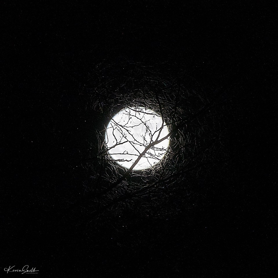 Moon Entangled