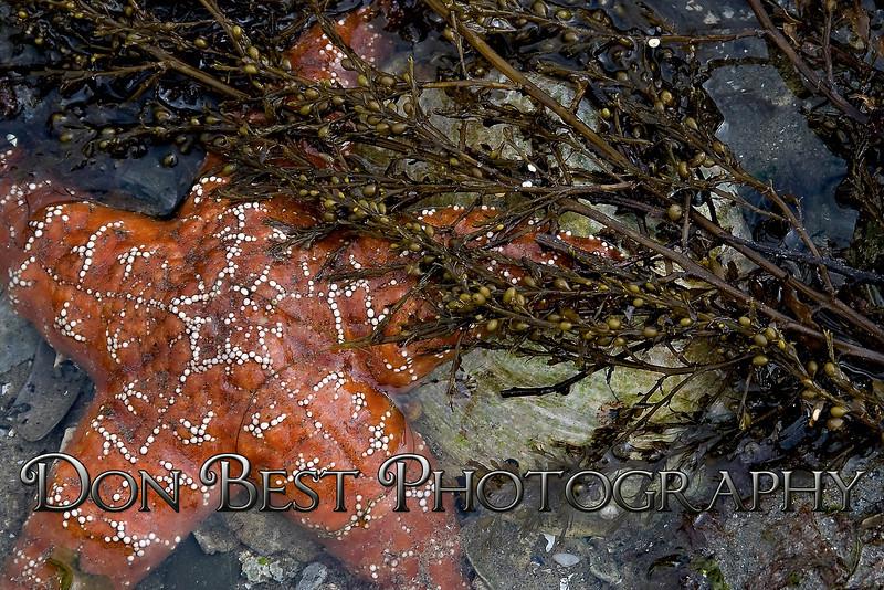 Starfish #3962