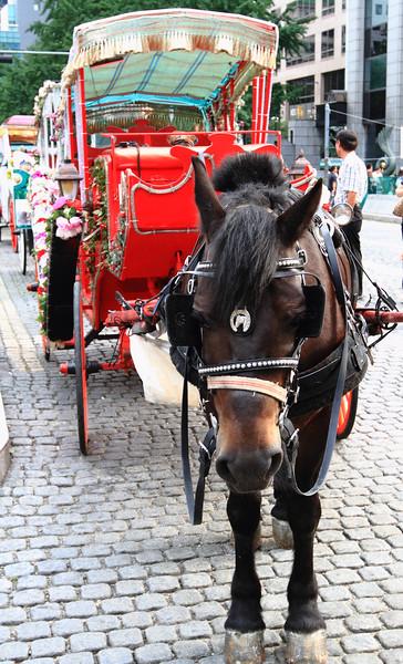 Horse in Seoul
