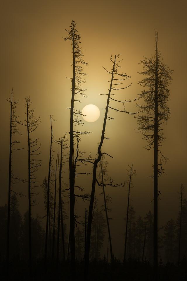 Gilded Sunrise