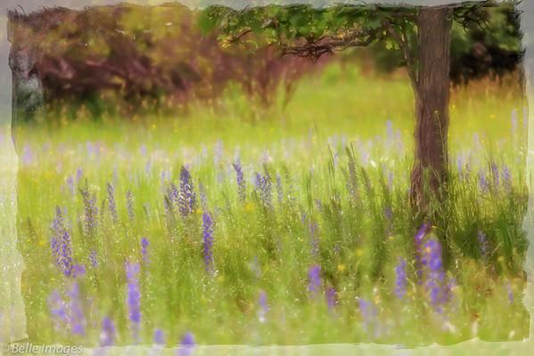 Gentle Fields of Flowers