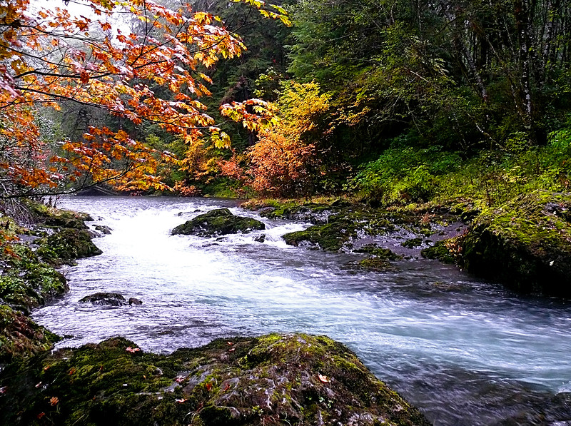 West Fork Humptulips River