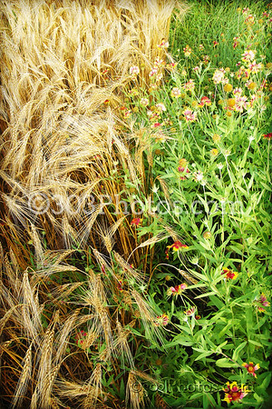 Flowers and Wheat