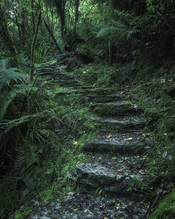 Enchanted Steps