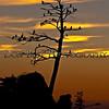 Three Graces Sunset 5483