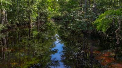 Swamp Strand