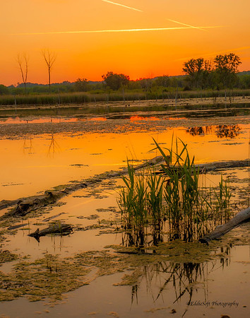 Banner Marsh, Banner, Illinois - MLD