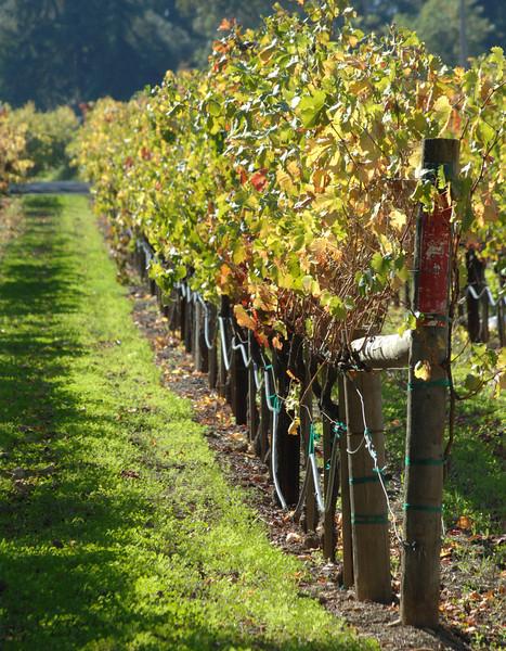 Andretti Winery  Napa, California