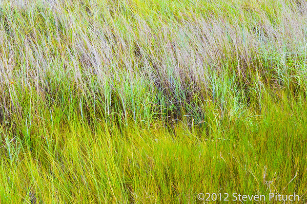 8/28/2012 - Grass taken at the Padre Island Yacht Club.