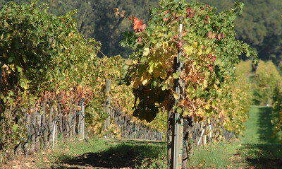 Andretti Winery  Napa, California