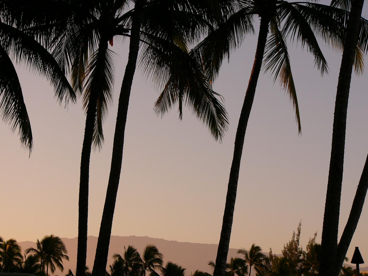 Waikaloa Palms