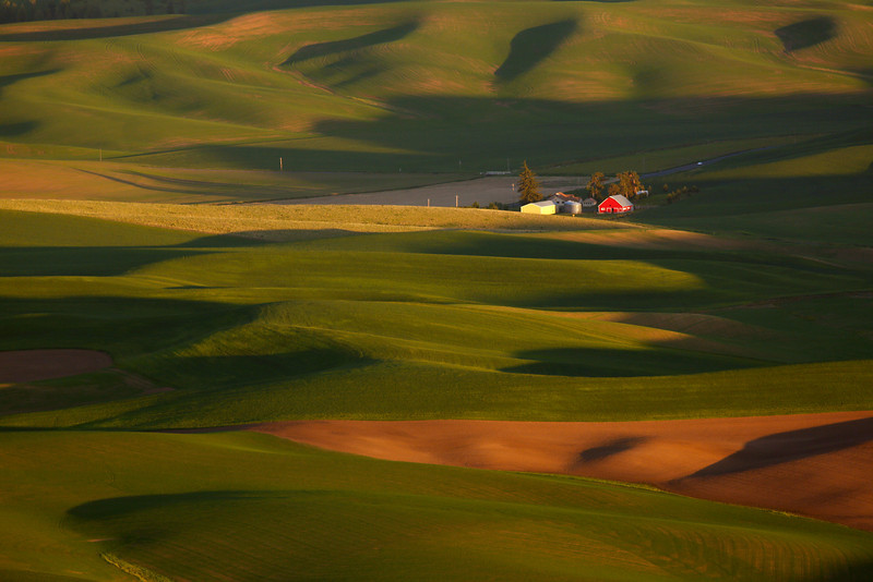Rolling Hills - The Palouse