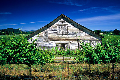 Sonoma County Wine Country