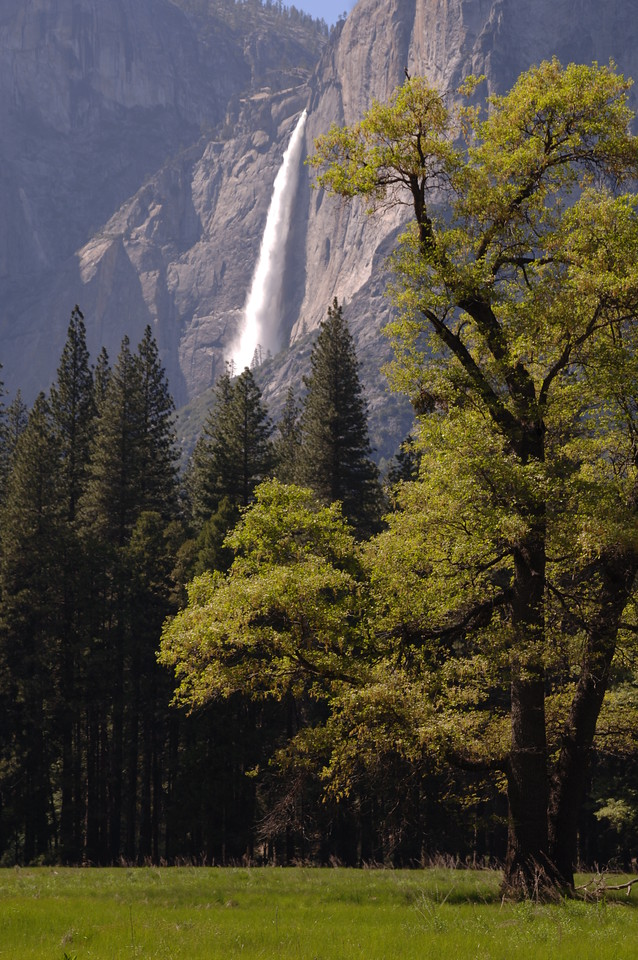 Yosemite Majesty