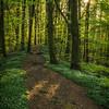 Anemone Path