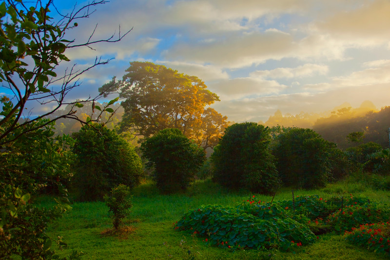 Waking views out the window of our small farm at sunrise in the Byron Shire, Australia.
