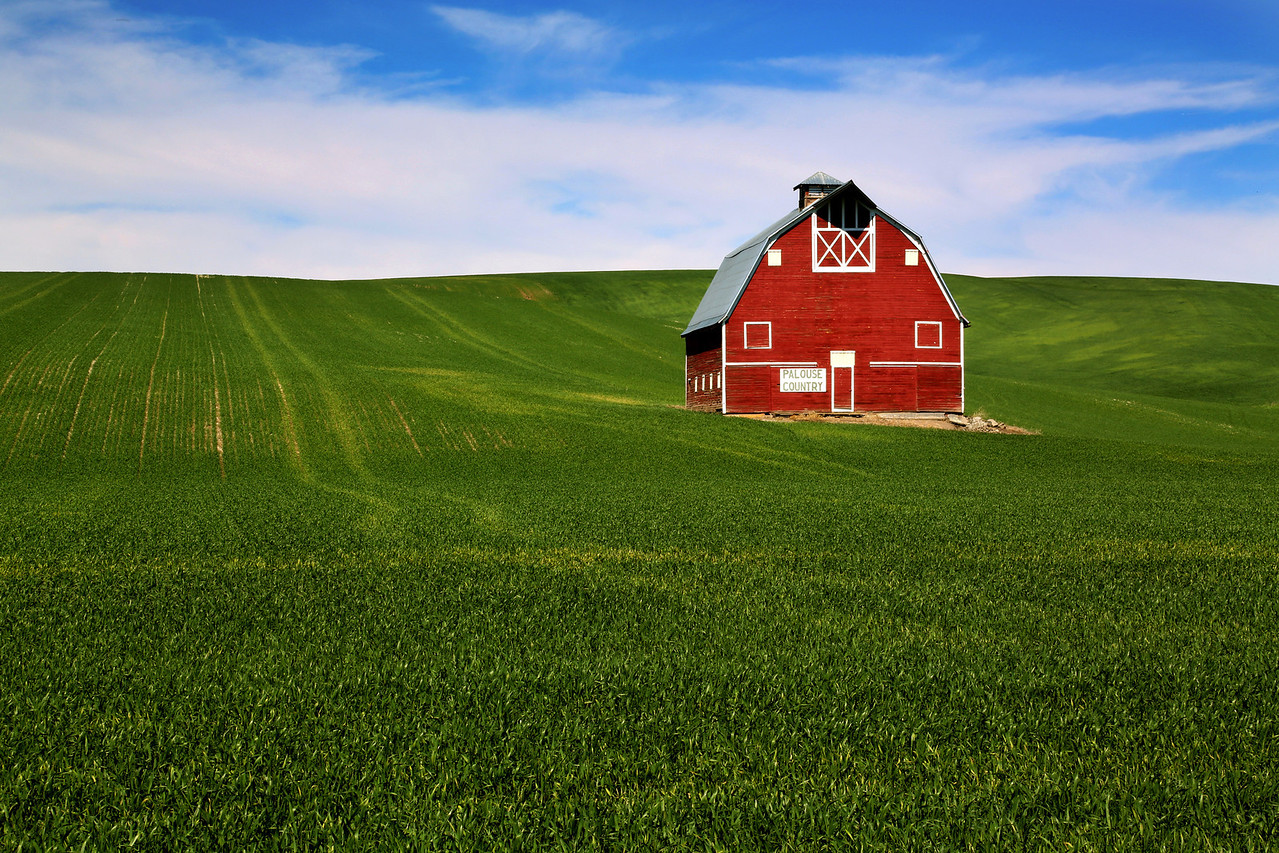 Red Barn and Wheat Field - The Palouse