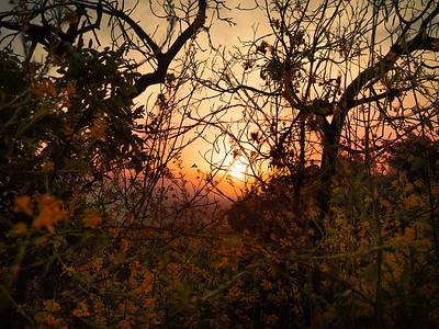 Hummingbird Autumn Sunrise