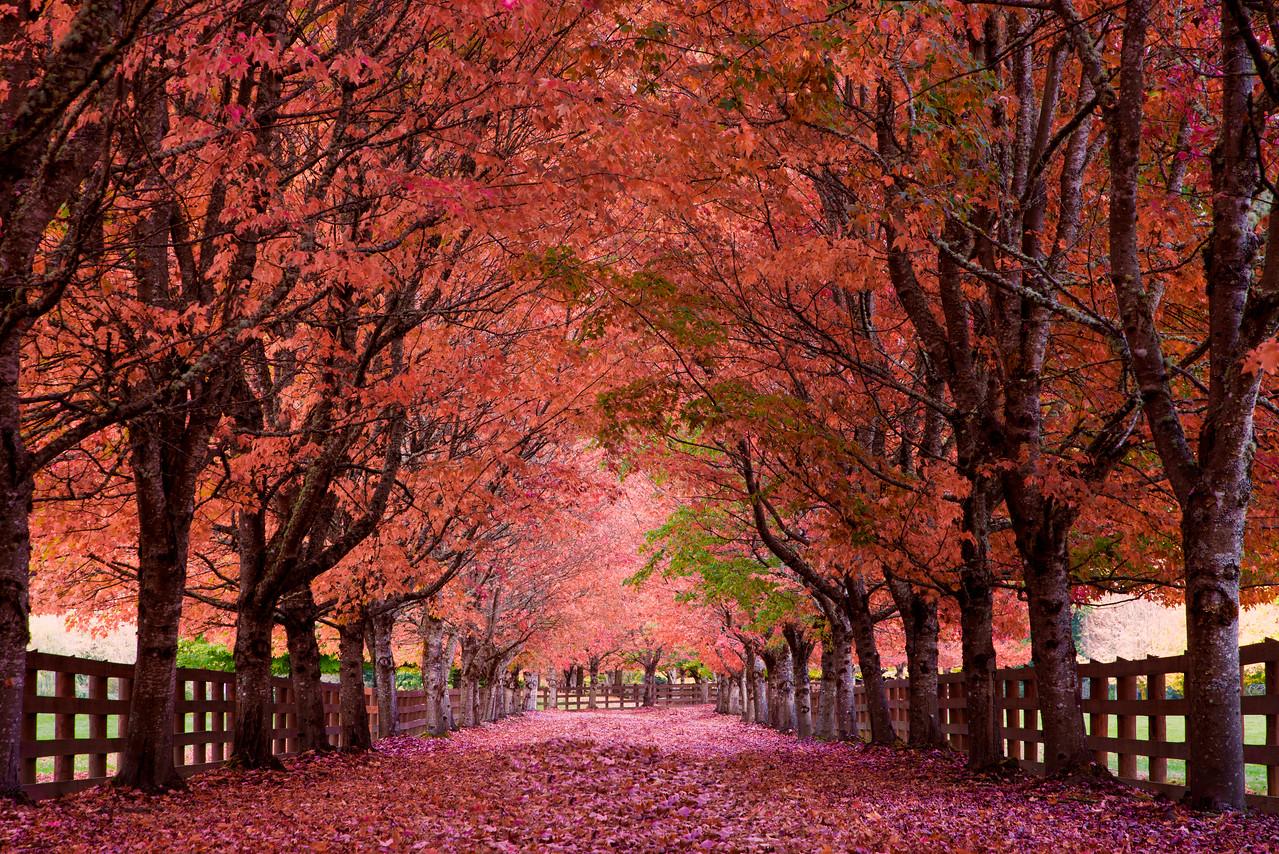 A dreamy fall driveway!