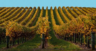 Vineyard near Hahndorf, SA, Australia