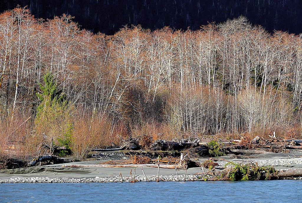 North Fork Quinault River
